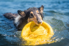 24/52 Leia & this yes (shila009) Tags: leia perro dog roughcollie portrait 2452 52weeksfordogs water summer agua beach playa verano