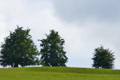 P1160848 (harryboschlondon) Tags: england englandphotography lumix tz100 stonor stonorpark stonorparkoxfordshire oxfordshire show june june2019 2019 16thjune2019