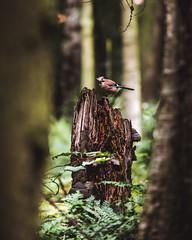 Jay (PhotoSteveE) Tags: yorkshire wildlife park yorkshirewildlifepark