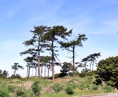 IMG_6545 (rdyfrde) Tags: fortworden porttownsend statepark