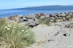 IMG_6561 (rdyfrde) Tags: fortworden porttownsend statepark