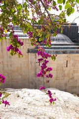 Jerusalem, Israel. (lolita.khlynina) Tags: pink flowers trees plants plant flower tree green stone architecture israel spring ruins fuji russia stones jerusalem ruin fujifilm archeology ישראל ירושלים
