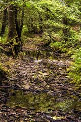Brûly-de-Pesche (Claudio Nichele (@jihan65 on Twitter)) Tags: nature bois rivière river woods forest forêt hainaut wallonie belgique belgium