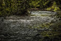 L'Eau Noire, Brûly-de-Pesche (Claudio Nichele (@jihan65 on Twitter)) Tags: nature bois rivière river woods forest forêt hainaut wallonie belgique belgium