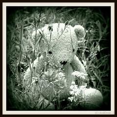 Findbear Holga / Alle Rechte vorbehalten © AndiDroid ;-)    ...HTBT (AndiDroid ;-)) Tags: andidroid foto photo photography photographie blume flowers flower sommer summertime summer bw blackandwhite monochrom blackandwhiteschwarzweis holga holgafotografie explore findbearfindbär teddy bears happyteddybeartuesday htbt