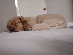 Roni (Santiago Stucchi Portocarrero) Tags: roni perro can cane dog hound hund chien santiagostucchiportocarrero