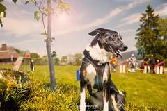 _DSC2017-Modifier (memphys.photo) Tags: dog dogphotography education lightroom photoshop portrait