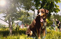 _DSC2013-Modifier (memphys.photo) Tags: dog dogphotography education lightroom photoshop portrait