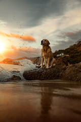 Maggie (Alexandremqs) Tags: yourbestoftoday explore expression sunrise scene sea rocks labrador lifestyle looking dogs doglove retriever sand reflection water clouds canon pets portugal portrait pose attencion nature natural