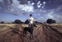 Walk (yuwhitefox) Tags: greyhound landscape portrait landscapeportrait sky clouds dog animals symmetry field male