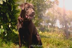 _DSC1979-Modifier (memphys.photo) Tags: dog dogphotography education lightroom photoshop portrait