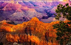 Canyon Sunset (glenkerr1) Tags: arizona glennolacom glenrickkerr grandcanyon impressive layers nationalpark naturalwonderoftheworld overwhelming rocks spellbounding sunset colors arizion golden green orange tree