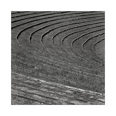 Circles (K.Pihl) Tags: amphitheatre kodaktrix400 lines geometry hasselblad500cm monochrome mittelformat mediumformat distagon50mmf40 schwarzweiss blackwhite park bw pellicolaanalogica analog film