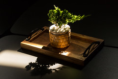 Relax (neilschelly) Tags: bonsai tree table shadow morning light backlit relax