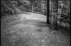 steep and winding driveway, downhill, Lakey Gap Heights, Black Mountain, NC, Olympus XA, Foma Retropan 320, HC-110 developer, 6.10.19 (steve aimone) Tags: driveway lookingdown curving winding cabin lakeygapheights blackmountain northcarolina olympusxa fomaretropan320 hc110developer compactcamera rangefinder 35mm 35mmfilm film monochrome monochromatic blackandwhite landscape