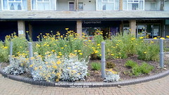 Mayfield Road shops carpark gardens - 16th June 2019 (D@viD_2.011) Tags: mayfield road shops carpark gardens 16th june 2019