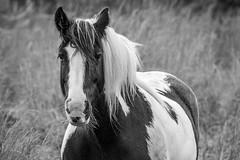 167/365 (Charlie Little) Tags: carlisle cumbria animals portrait horse blackandwhite bw mono nikon d7200 tamron18400mm p365 project365