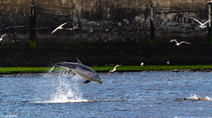 Flipper Getting Air @ Torry Battery, Greyhope Road Aberdeen,,