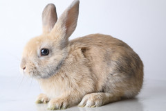 A222126 -- Marco -- blonde bun (The.Rohit) Tags: adopt adoption animalshelterphotography ottawa ottawahumanesociety petphotography rescue shelter