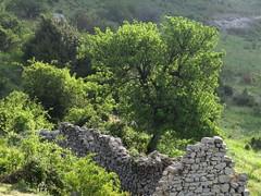 Vieilles pierres (bernard.bonifassi) Tags: