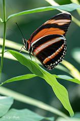 BVG_5905 (Borreltje.com) Tags: burgerszoo dierentuin zoo animals nikon