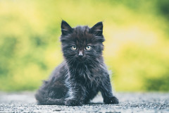 Black (Marc Andreu) Tags: kitten black cute curious looking look eyes cat outdoors sit little pet animal mammal feline domestic kitty adorable outdoor nature small baby garden green young fur beautiful sweet pretty closeup natural marcandreu