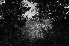 DSC01334 copy- on1 (douglasjarvis995) Tags: haworth view wood trees yorkshire mono monochrome bnw