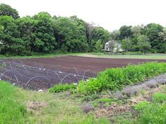 tilling the back field (BelmontAcresFarm) Tags: may 2019 belmont farm belmontacres tilled backfield