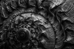 Spiral (rsvatox) Tags: stilllife details monochrome closeup nocolor spiral macro abstract blackandwhite structure shell