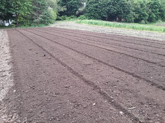 tilled field for nightshade patch (BelmontAcresFarm) Tags: may 2019 belmont farm belmontacres tilled field