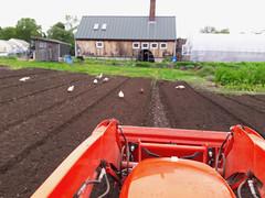 tilling the back field, with ducks (BelmontAcresFarm) Tags: may 2019 belmont farm belmontacres tilled backfield tractor ducks