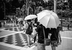 en passant par KL (Jack_from_Paris) Tags: p1000435bw panasonic dmcgx8 monochrome mono bw noiretblanc raw mode dng lightroom rangefinder télémétrique capture nx2 lr wide angle kl kuala lampur tourisme voyage travel soleil sun parasol