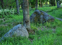 Stones and trees (kaptennemo32) Tags: stones trees nature