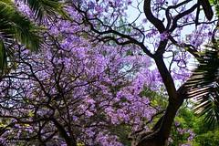 Final de primavera. (AviAntonio) Tags: arbres colors primavera spring contrapicat contrapicado colores árboles