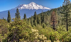 Mount Shasta in Northern California seen from Castle Lake Road. (lhboudreau) Tags: