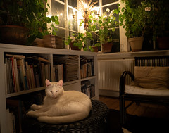 Two lights, some books, one cat + a lot of green stuff (bohelsted) Tags: home em5markii varioelmarit 1260 leicadg cat lowkey lowlight books