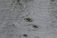 Little raindrop on a grey day (CapMarcel) Tags: little raindrop grey day