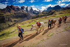 Caravan (Luis Sousa Lobo) Tags: 738a18332 peru peruvian horses caballos cavalos andes people mountain man men canon 1740 5d mark iv rainbow