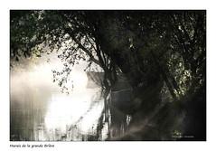 La lumière d'un jour sur la Brière (Bruno-photos2013) Tags: marais brière brume bretagne brouillard barque brunolandry loireatlantique france reflets reflection contrejour ombres saintlyphard monochrome