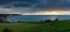 The bird (jlmicrocosm) Tags: bird sunset sun soleil oiseau ocean normandie plage beach color landscape landscapes paysages