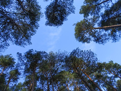 , 2018 Nov 01 (Dunnock_D) Tags: britain gb highland highlands scotland uk uath unitedkingdom blue clouds forest sky trees white woodland woods kingussie