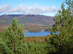 , 2018 Nov 01 (Dunnock_D) Tags: britain gb highland highlands lochinsh scotland uk uath unitedkingdom blue clouds forest loch sky trees white woodland woods kingussie tomdubh island mountain