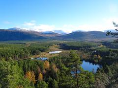 , 2018 Nov 01 (Dunnock_D) Tags: scotland highlands britain highland gb uk blue trees sky white green water grass clouds forest woodland woods unitedkingdom lochan uath lochans kingussie