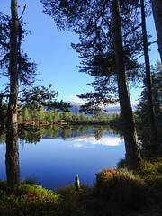 , 2018 Nov 01 (Dunnock_D) Tags: britain gb highland highlands scotland uk uath unitedkingdom blue clouds forest grass green lochan reflection reflections sky trees water white woodland woods kingussie