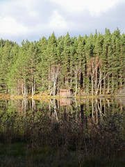 , 2018 Nov 01 (Dunnock_D) Tags: britain gb highland highlands scotland uk uath unitedkingdom blue clouds forest grass green hide lochan reflection reflections sky trees water white woodland woods kingussie