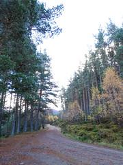 , 2018 Nov 01 (Dunnock_D) Tags: britain gb highland highlands scotland uk uath unitedkingdom forest grass green path sky trees white woodland woods kingussie