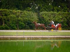 5885 - Gig, oil painting (Diego Rosato) Tags: gig calesse carriage carrozza pond stagno oli painting olio tela reggia realm palazzo reale royal palace caserta fuji x30 rawtherapee gimp