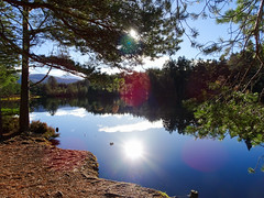 , 2018 Nov 01 (Dunnock_D) Tags: britain gb highland highlands scotland uk uath unitedkingdom blue clouds forest grass green lochan reflection reflections sky sun trees water white woodland woods kingussie lensflare