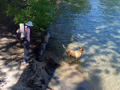 Bella swim time! (simonov) Tags: lake tahoe nevada skunk harbor forest trees bella dog hund chien 狗 σκύλοσ madra cane 犬 perro 개 سگ собака الكلب germansheprador