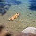 Bella swim time!
